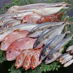 鮮魚Fresh Fish
